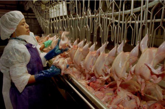 Оксфам: В САЩ в птицекланиците отиват на работа с памперси